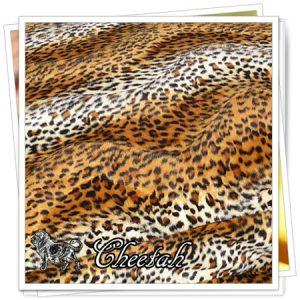 _animals_01_Cheetah