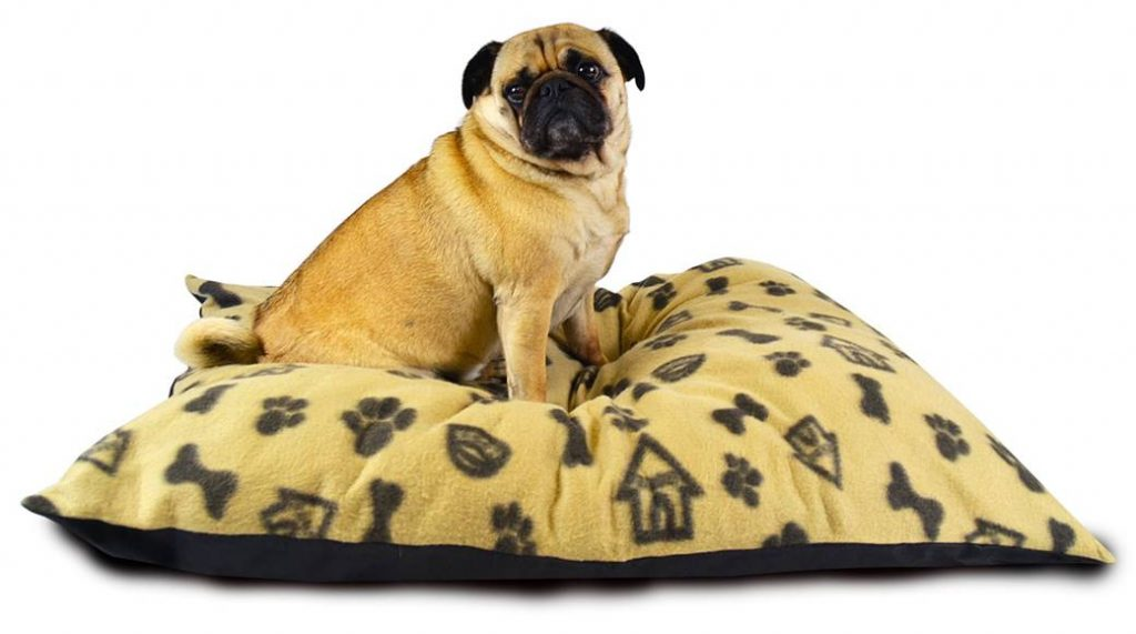 Dog_house_Fleece_Cushion_Tedy_yellow_01